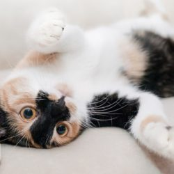 Научно доказано, что у кошек бывает аллергия на хозяев