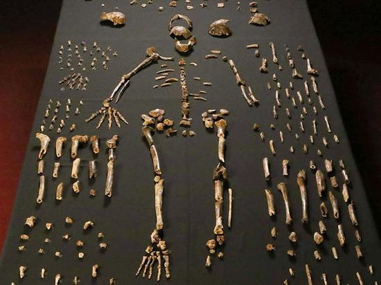 Сенсационная находка в Африке оказалась бомбой, заложенной под теорию эволюции