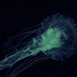 Биологи выяснили, на кого были похожи первые многоклеточные организмы