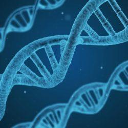 """Новое в истории происхождения человека: ядерная ДНК """"расскажет"""" кто мы"""