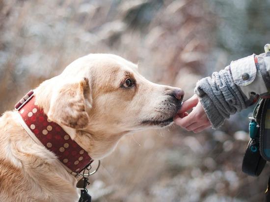 """Ученые разобрались в эмоциях собак: """"Как трехлетние дети"""""""