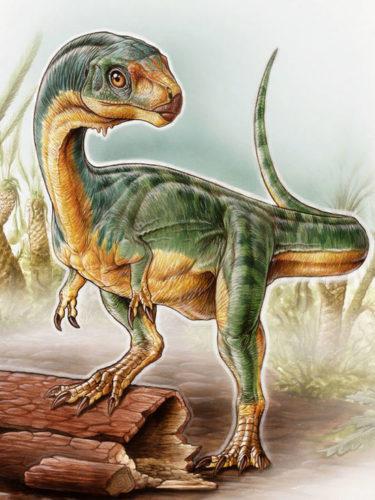 Палеонтологи нашли симпатичного травоядного родственника тираннозавров