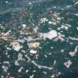 Биологи нашли существ, разносящих пластик по всему океану