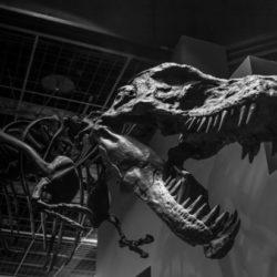 Динозавр - мастер маскировки обнаружен в Канаде