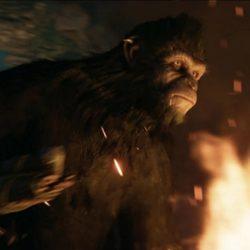 В игре по фильму «Планета обезьян» будет реализован мультиплеер