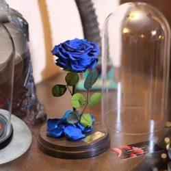 Розы в колбе: общая информация и где купить