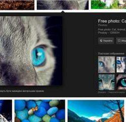 Одной кнопкой меньше: Google изменил интерфейс поисковика