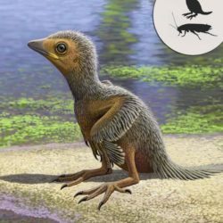 Обнаружены останки птенца одной из первых птиц