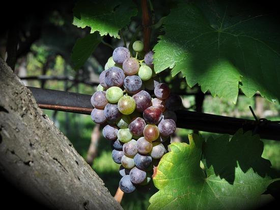 Кувшин с вином двухтысячелетней выдержки найден в Китае