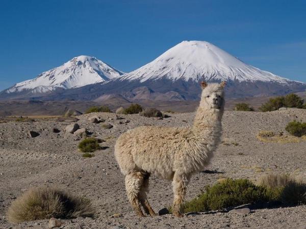 Куда и как НЕ НАДО эмигрировать или не надо путать туризм с эмиграцией