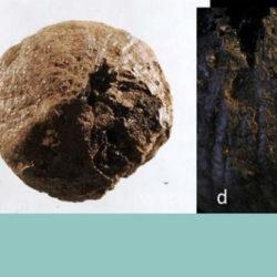 В Швеции археологи нашли полуторатысячелетнюю луковицу