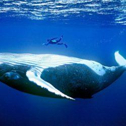 Морские млекопитающие неспроста обычно такие огромные