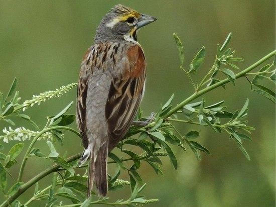 В США обнаружены птицы, убивающие собственных птенцов