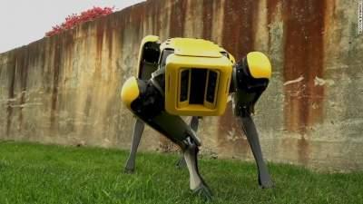 Boston Dynamics начнет продавать роботов-собак