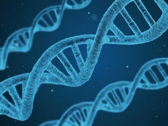 Открыт ген, сделавший человека венцом эволюции