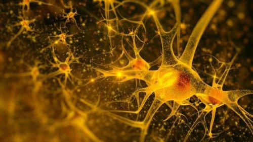 """Новая технология позволила впервые запечатлеть образы нейронной деятельности """"второго мозга"""" организма человека"""