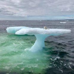 Находка на льдине в открытом океане удивила рыбаков