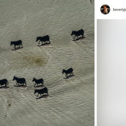Фото «зебр с полосатыми тенями» заставило задуматься, что реальность иллюзорна