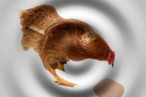 """Квантовая механика дала весьма неожиданное решение парадокса """"курица или яйцо"""""""