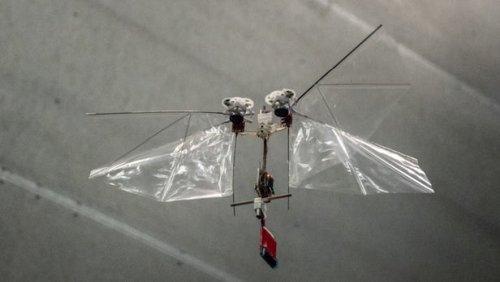 DelFly Nimble - летающий робот, максимально точно копирующий особенности полета одного из видов насекомых