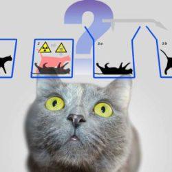 """Ученые нашли способ """"спасти"""" кота Шредингера"""