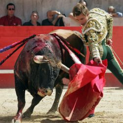 Запретят ли корриду в Испании