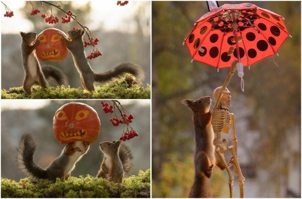 Забавные фото белок к Хэллоуину
