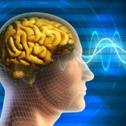 "Прямая коммуникация ""от мозга к мозгу"""