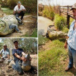 В Австралии поймали крокодила, который охотился на коров