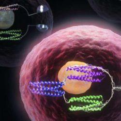 Ученые превратили живые клетки в компьютеры, используя белковые логические элементы
