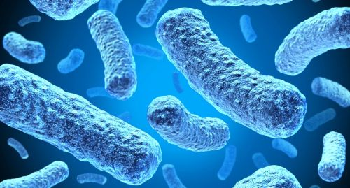 """Новая биогибридная батарея черпает свою энергию из """"электрических"""" бактерий"""